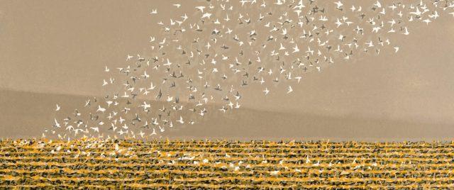 Beck birds